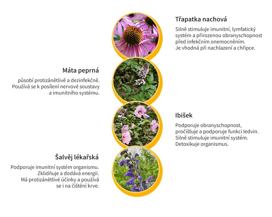 Byliny na posílení imunity čaj komplet